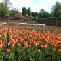 April showers & Spring flowers…..